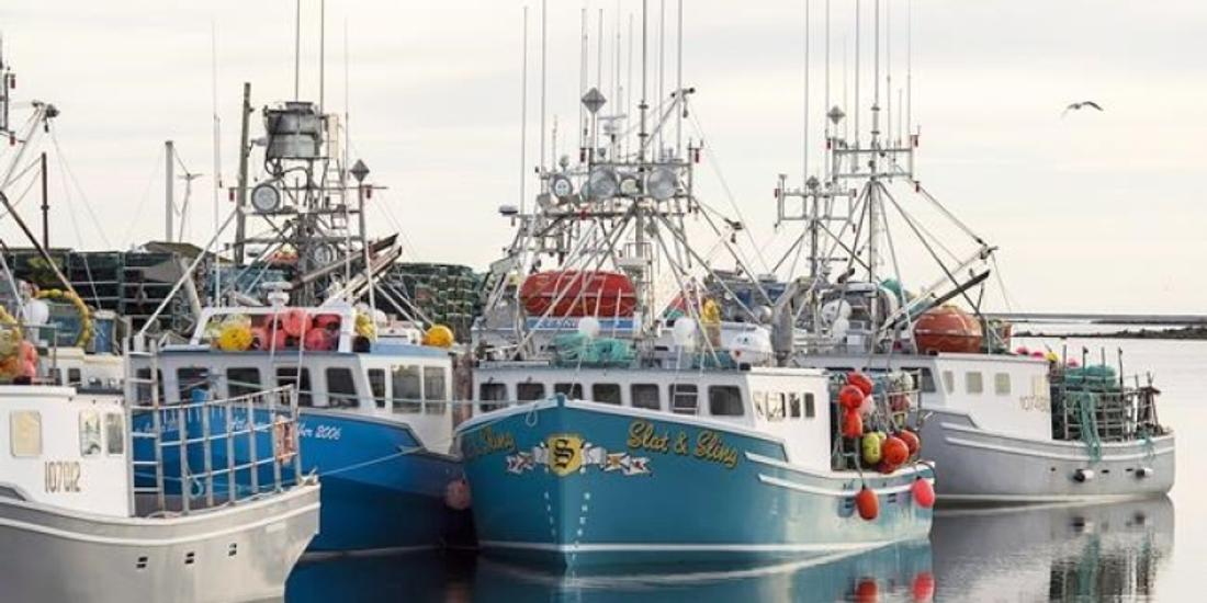 'Not so good': Ocean organizations targets Canadian fishery management in audit