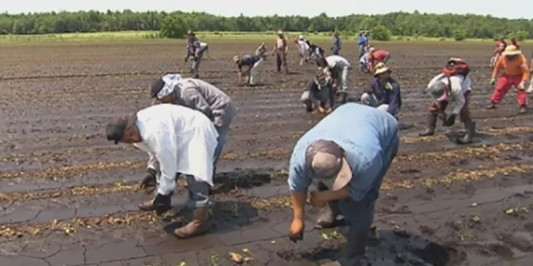 Migrant worker group condemns Liberals' farm exemptions from public health precautions