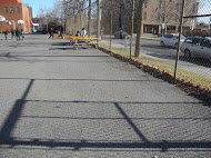 Ash trees on Catherine - yard will lose shade