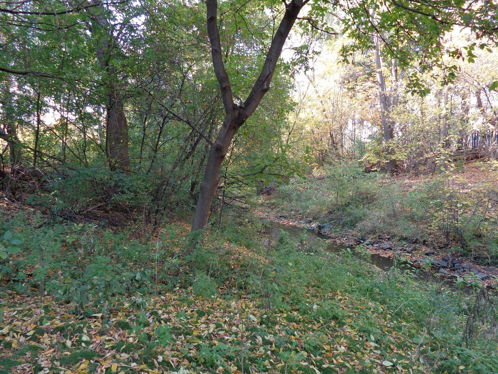 Sawmill Creek Nature Park 076