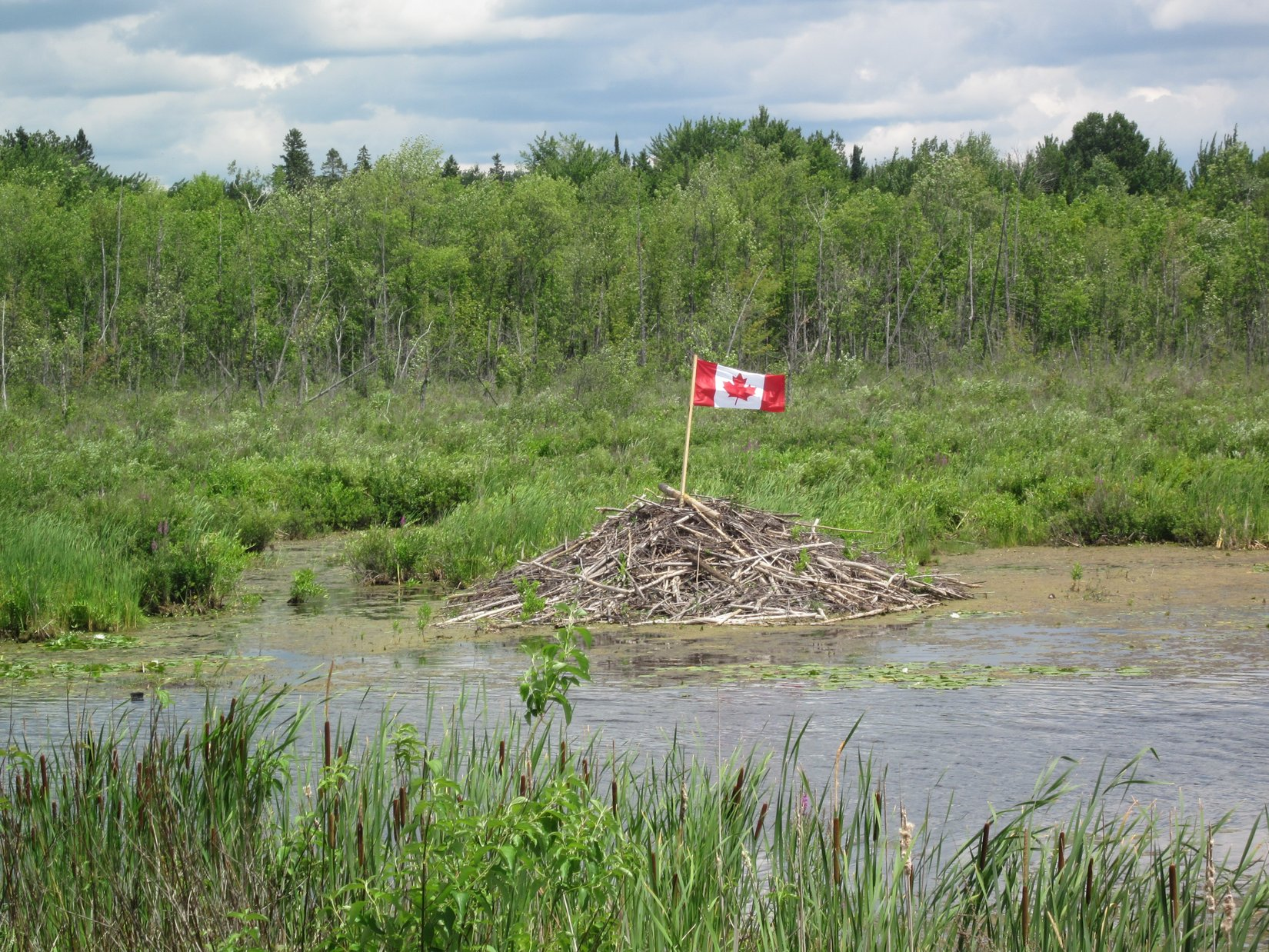 Beaver lodge Canada Day2