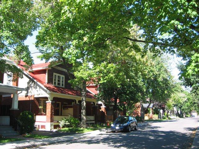 Tree canopy on Ossington Avenue