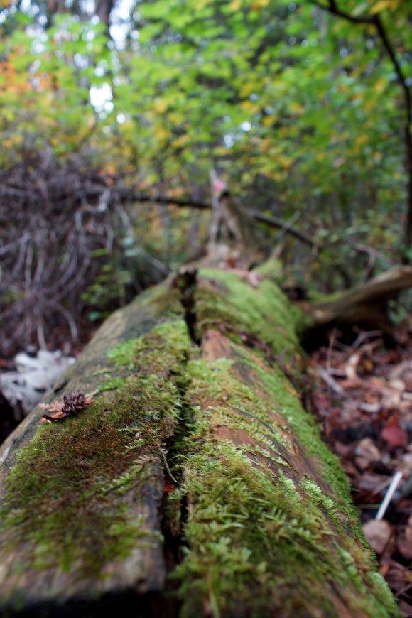kemp-woodland-3