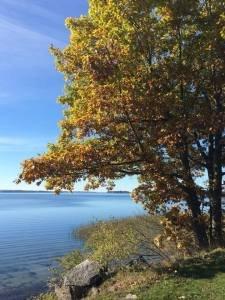Trees-We-Cherish