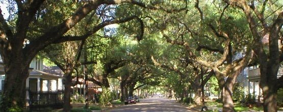 Tree-street