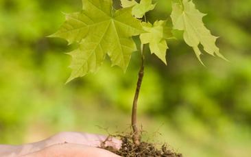 Tree Species List 2021 **UPDATED**