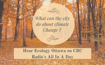 Hear Ecology Ottawa on CBC Radio's All In A Day