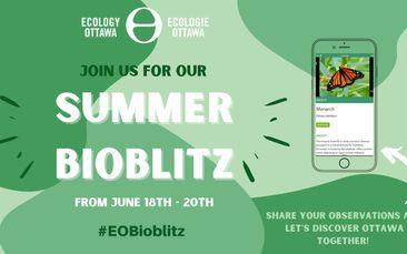 Summer Bioblitz