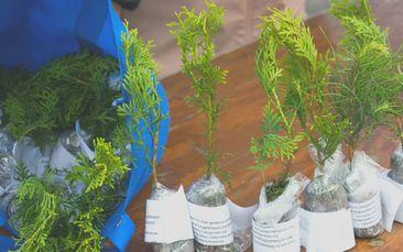 2021 Tree Giveaways