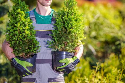 2019 Tree Giveaway Events