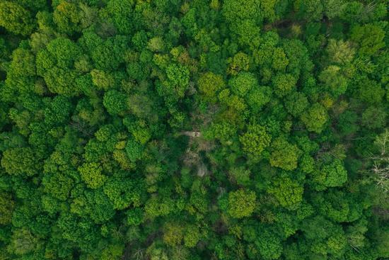 Tree Campaign