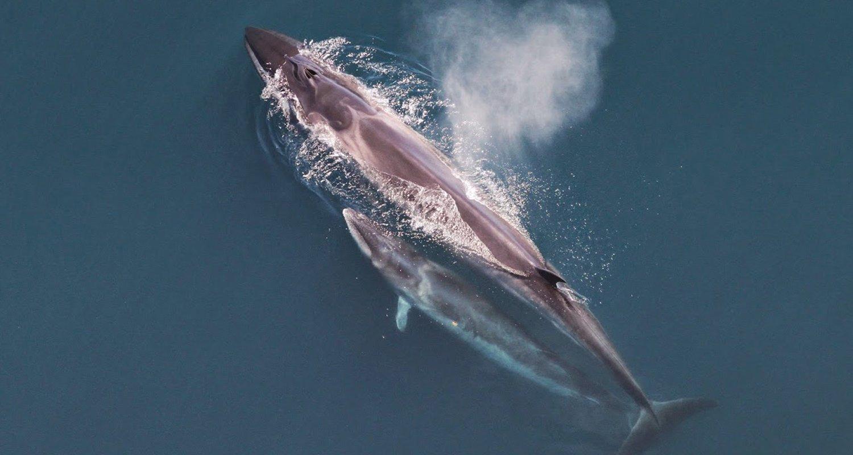 Sei-Whale_-_Nature_Canada.png