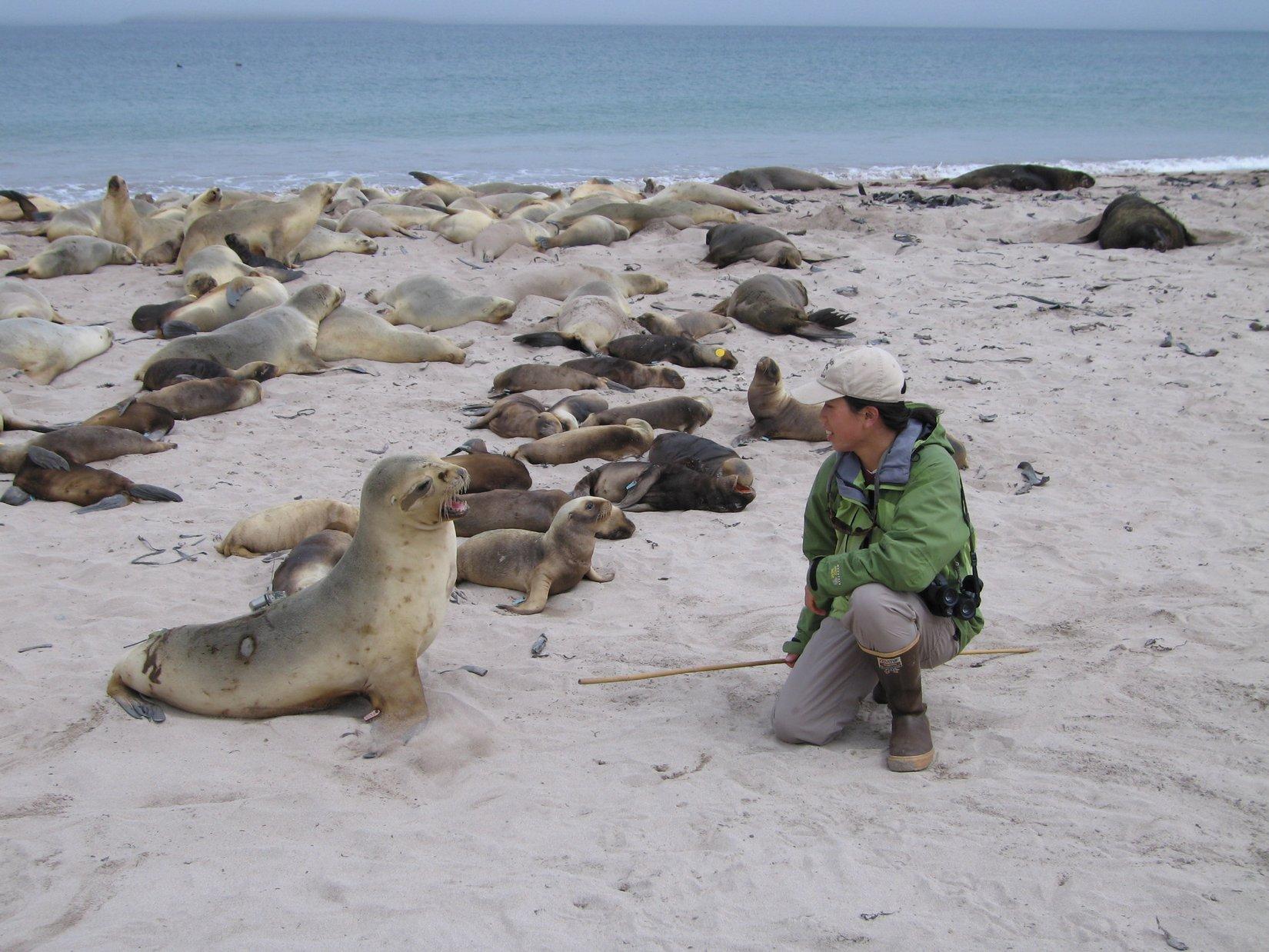 Elaine_with_sea_lions.JPG