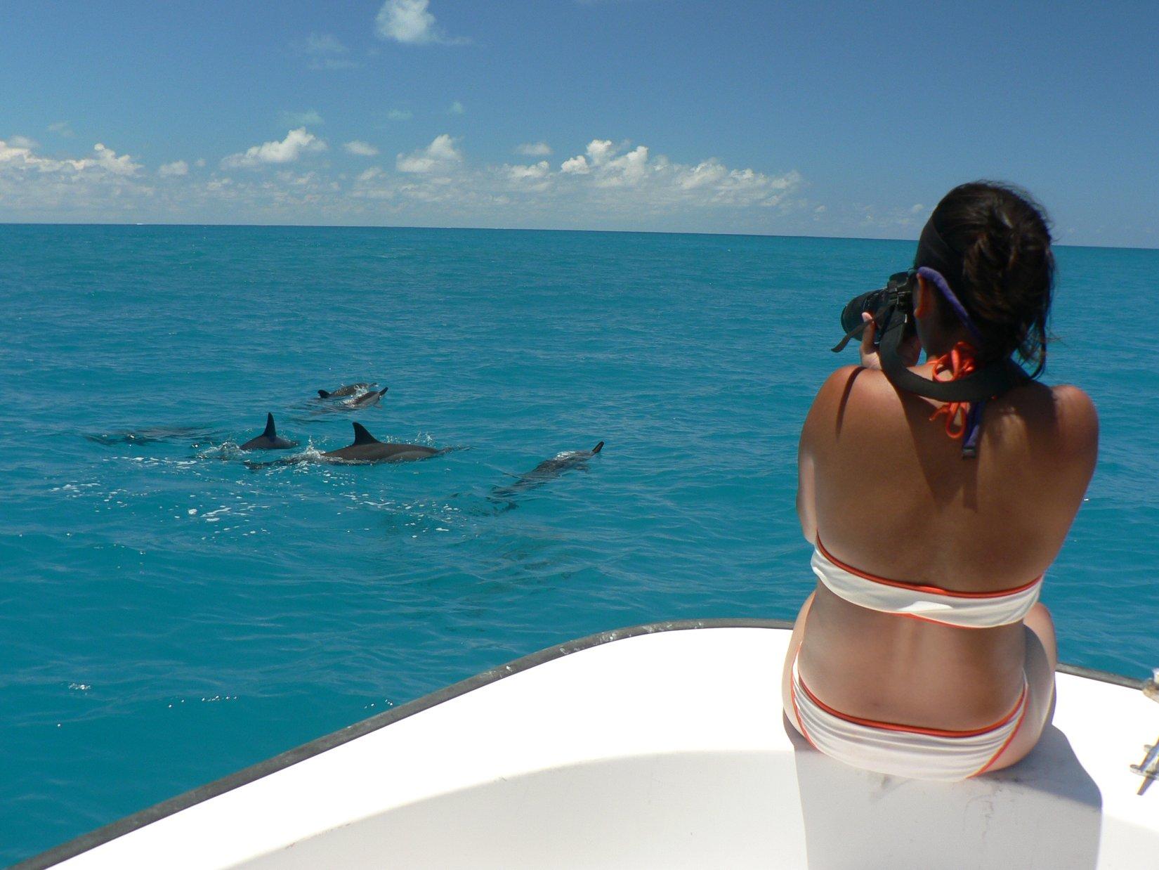 Elaine_dolphins.jpg