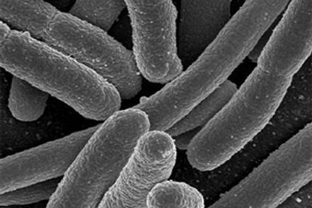 The Mount Polley E. Coli Mystery