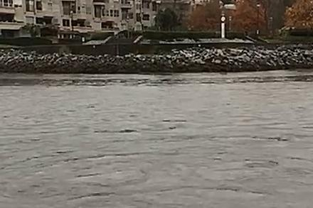 Keeping an Eye on Sewage Overflows in False Creek