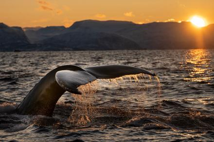 The Gentle Giants of BC Waters