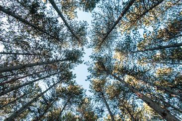 Ecology Ottawa - Lament For Tress
